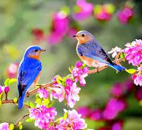 birds_flowers